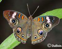 Butterfly Gardening,Butterfly Garden Certification Program, Butterfly Garden  Plants,Common Butterflies In Houston,