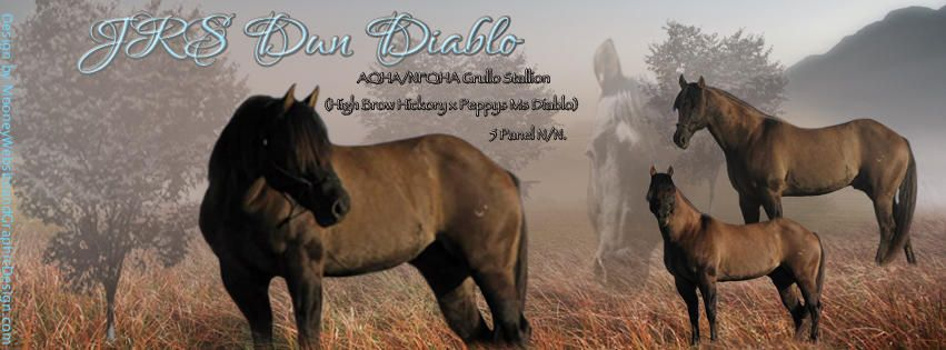 JRS Dun Diablo, Grullo son of High Brow Hickory | Equines ...