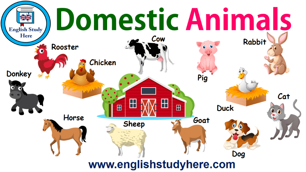 Domestic Animals Names In English Animals Name In English Animals Animals For Kids