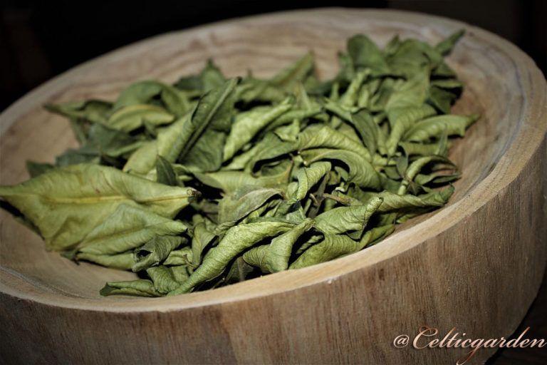 Zitronenblätter Räucherung ~ Für einen starken Zusammenhalt #einheimischepflanzen