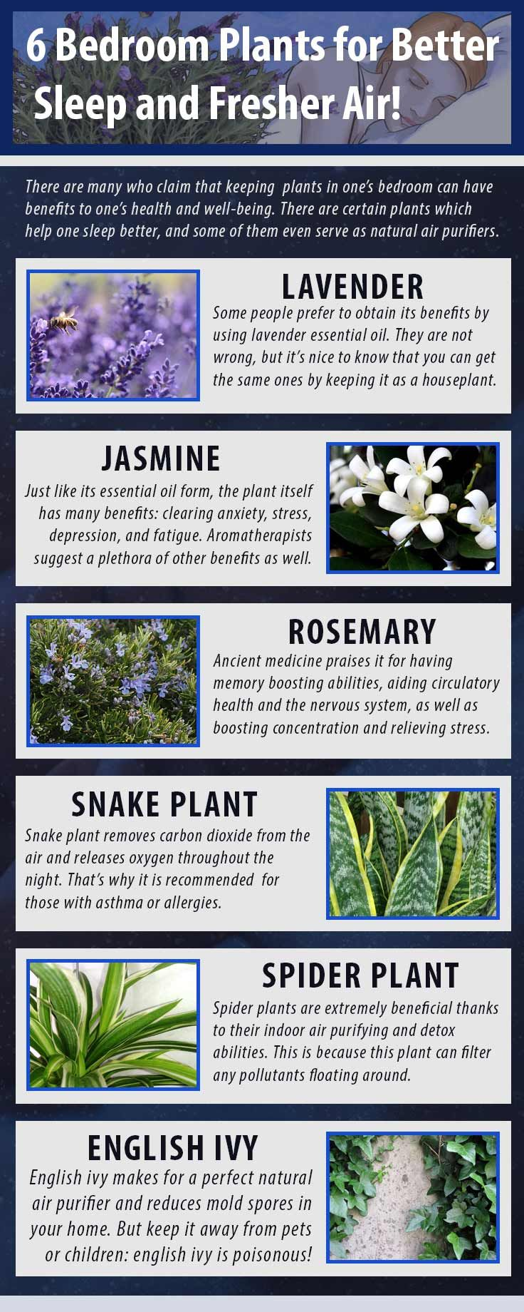 Pin By Eric Wohlt On House Plants And Gardening Plants Bedroom Plants Natural Air Purifier