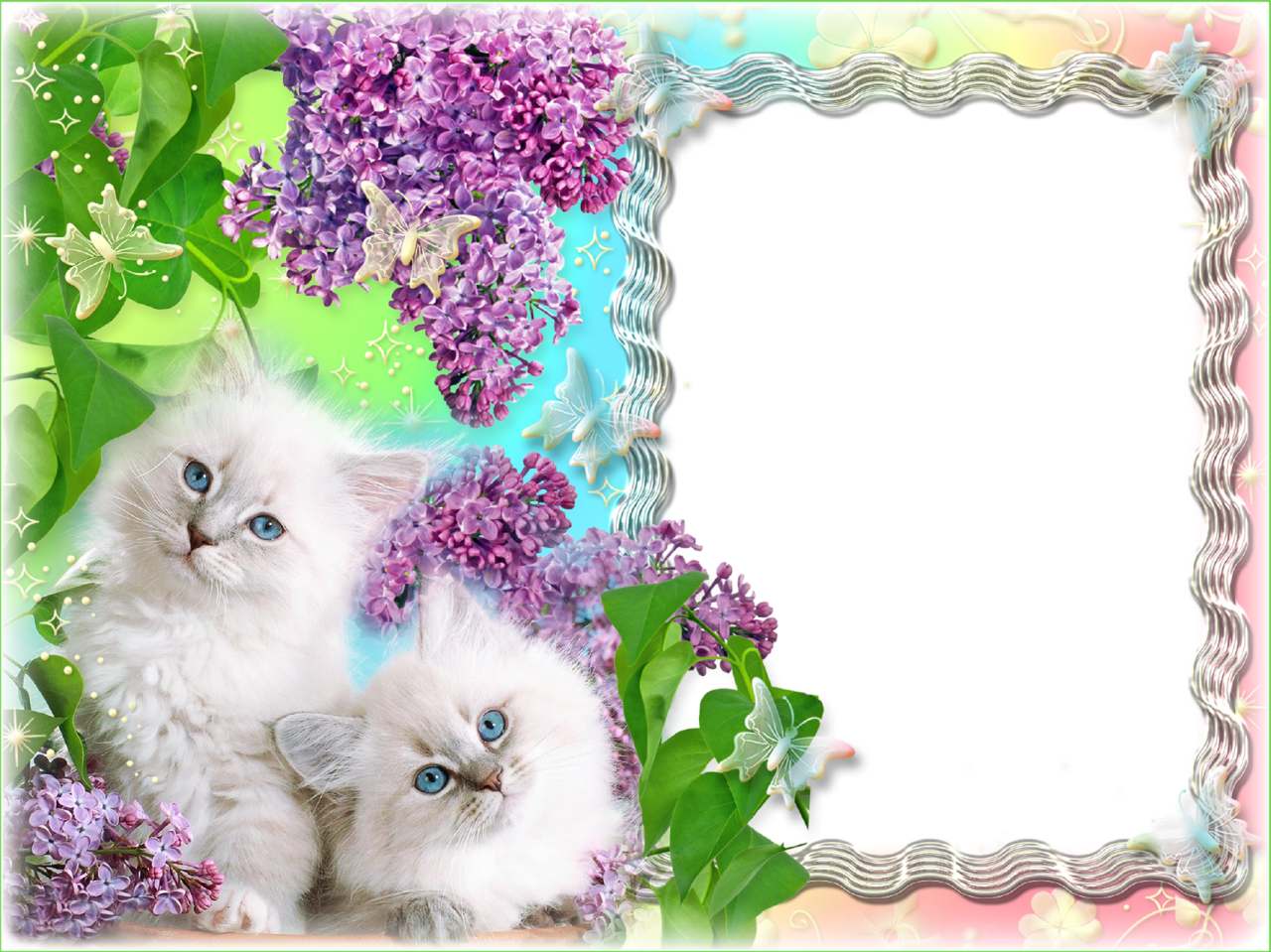 transparent purple frame floral photo frame which depicts cute kittens with blue eyes in