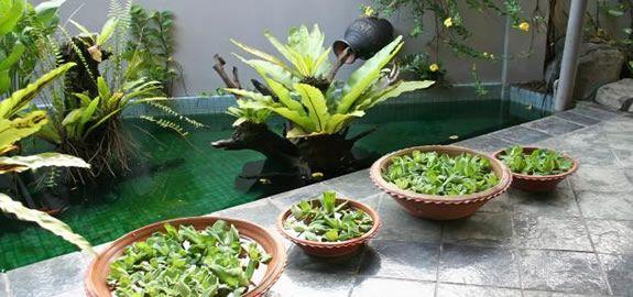 indoor water garden   ideas para el jardín interior - Interior ...