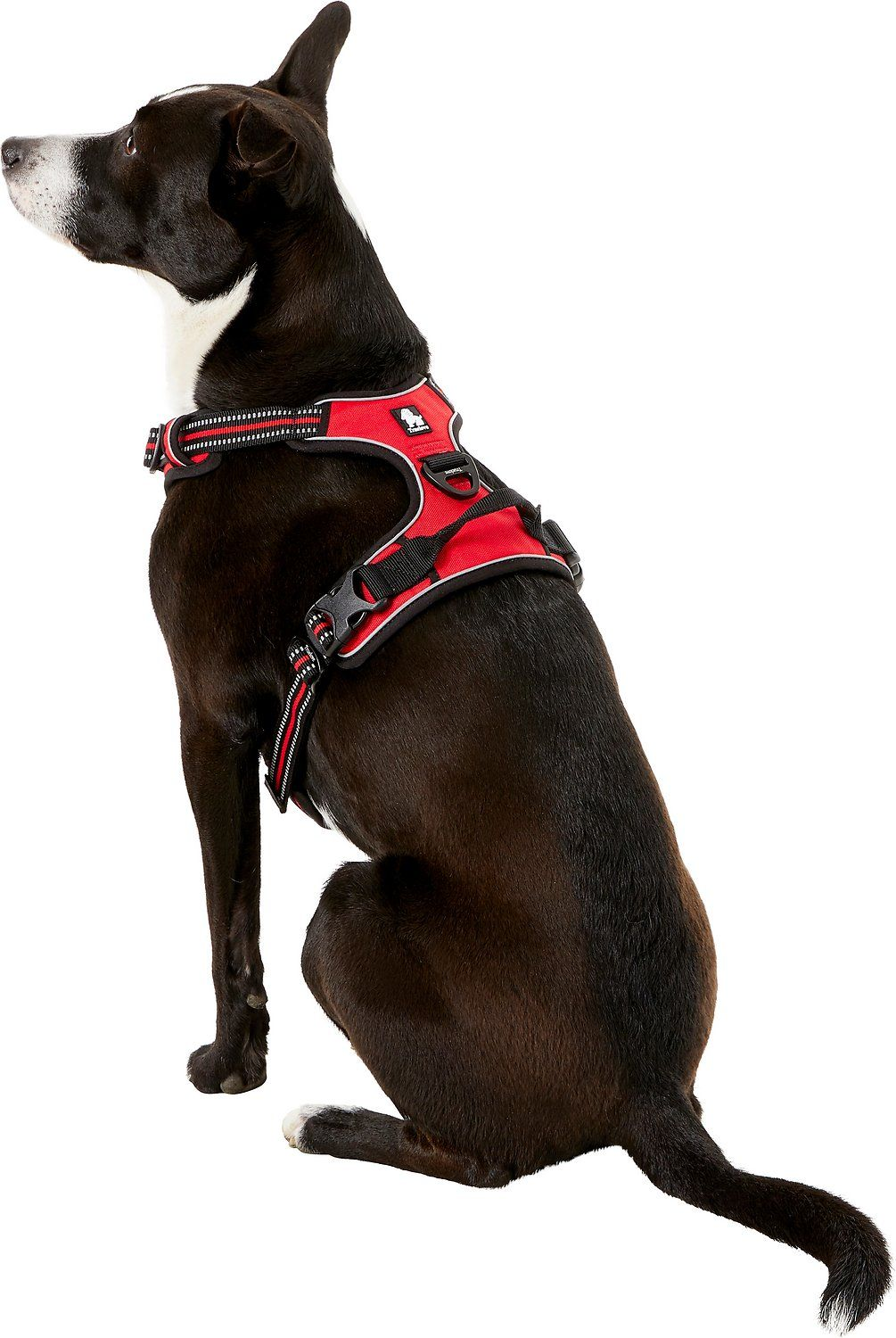 Chai S Choice 3m Reflective Dog Harness Orange Large Chewy Com