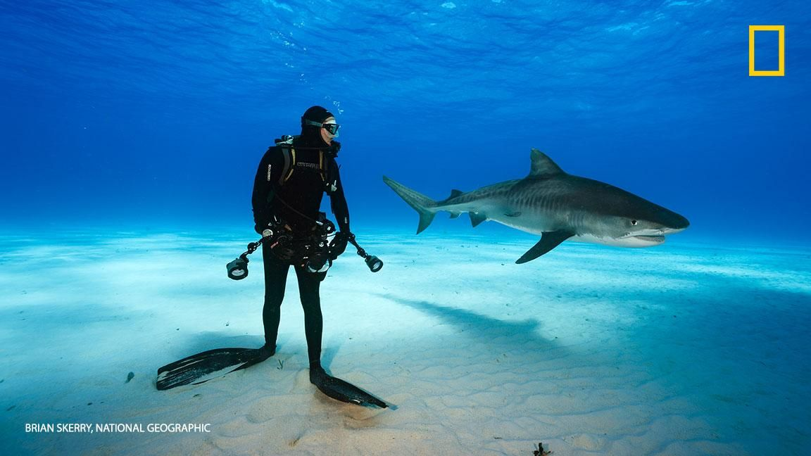 [ARTICLE] @NatGeoPhotos : Our photographer got up-close and personal withmagnificent sharks at tiger beach. Take a look: https://t.co/Hl1JXoA62W