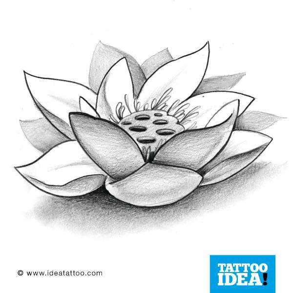 Fiore Di Loto Tattoo Disegno.Tatuaggi Fiore Di Loto Cerca Con Google Fiore Di Loto