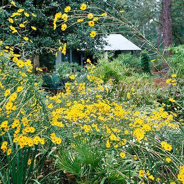 15 great native plants for southwestern gardens perennials yellow flower bed designs mightylinksfo