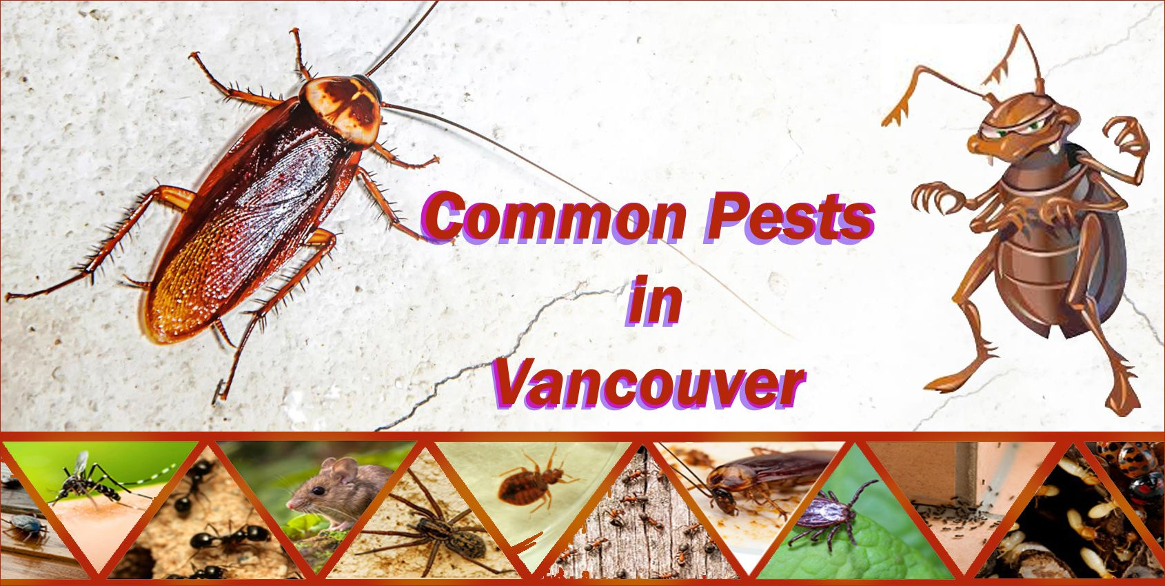 Control All Pests In Vancouver With The Help Of Effective Methods Pest Control Harmful Insects Vancouver