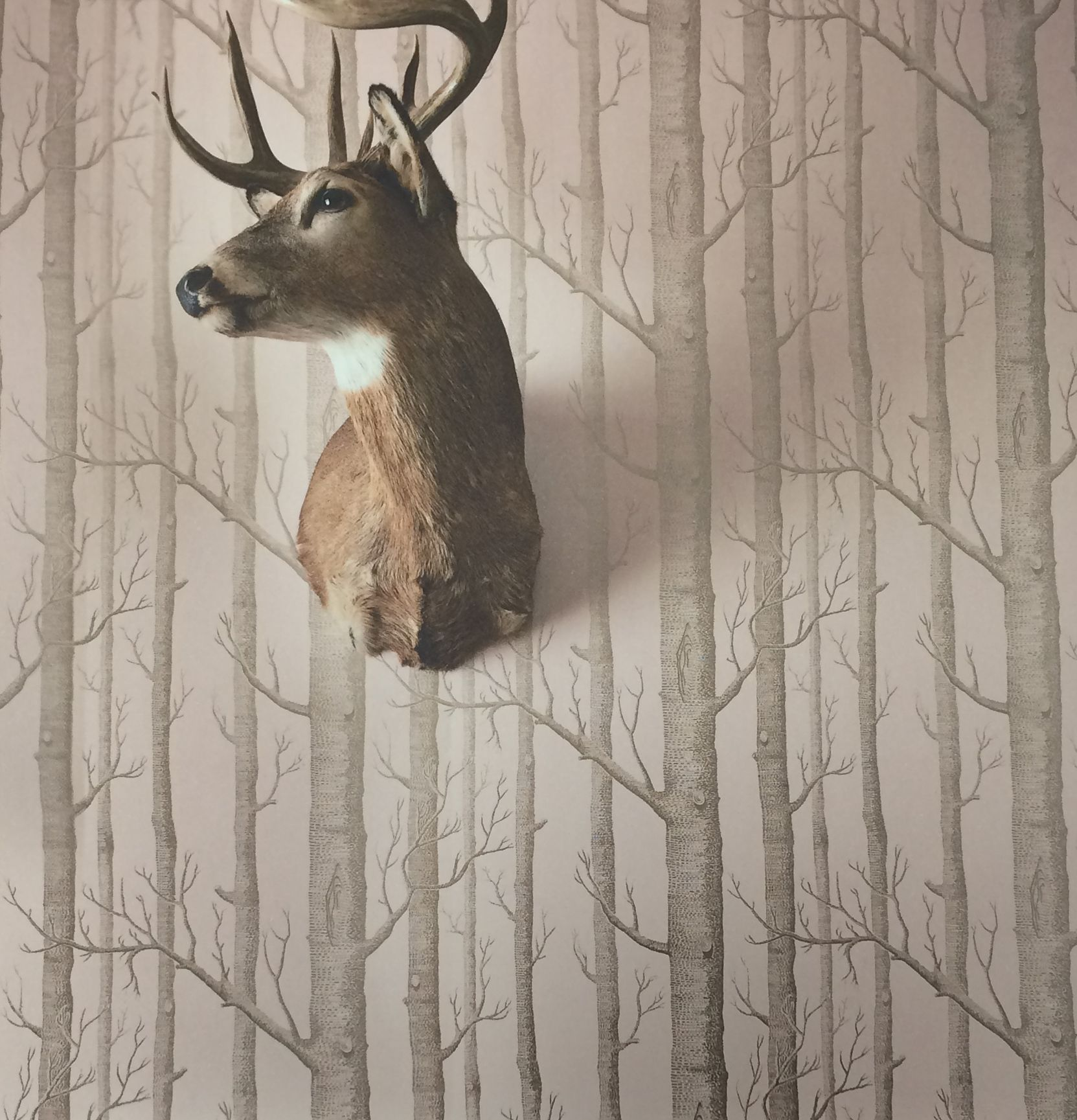 """The """"Woods"""" wallpaper was first designed by Michael Clark in 1959"""
