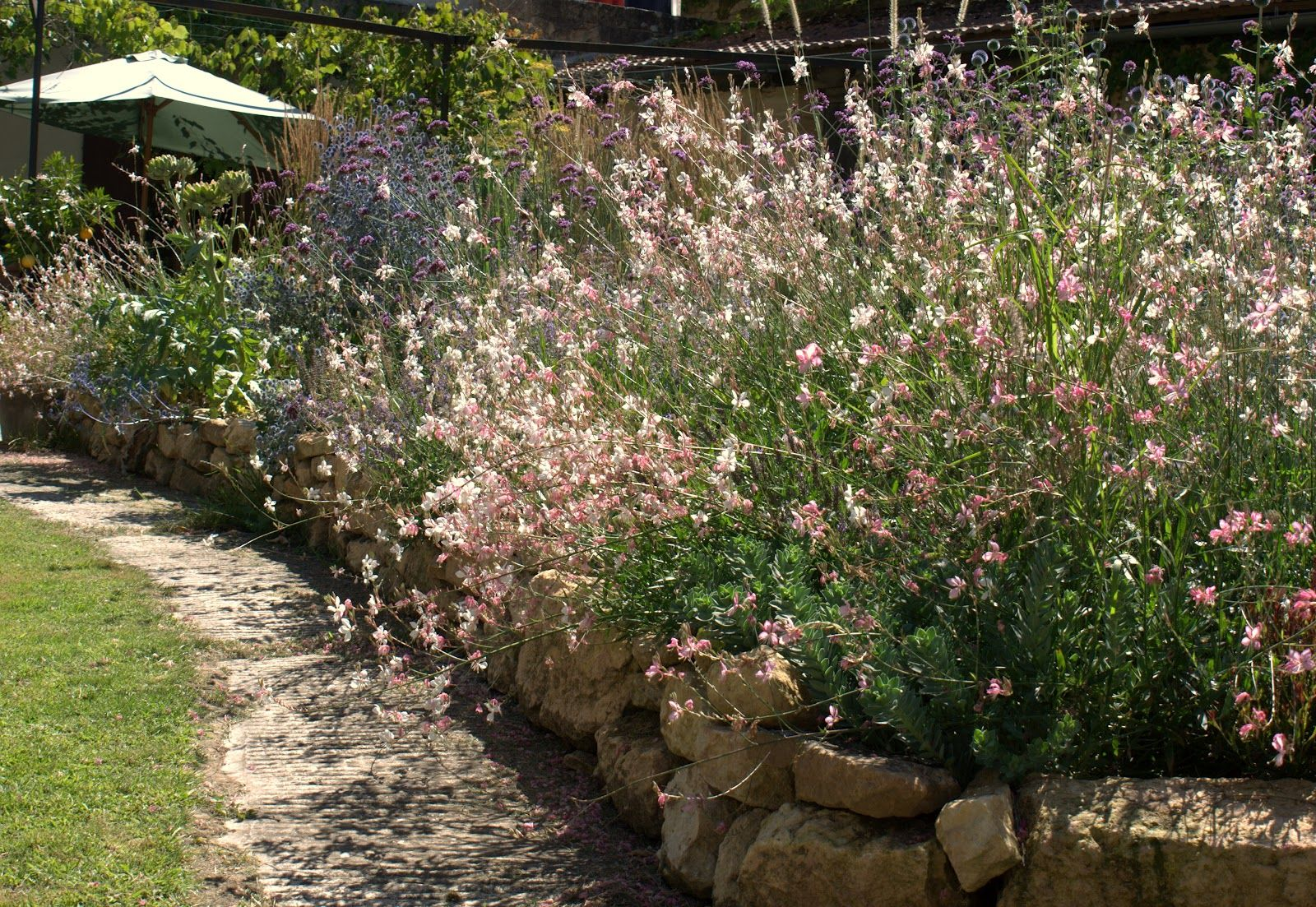 Gaura the way it SHOULD look! in france | gardens by design ...