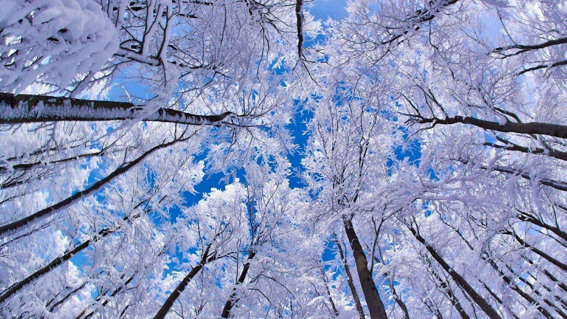 Winter Desktop Backgrounds Wallpaper Winter Category Nature Wallpaper Forest Photos Winter Wallpaper
