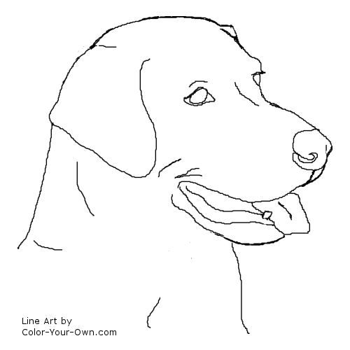 Line Drawing Dog Face : Labrador retriever intelligent and fun loving
