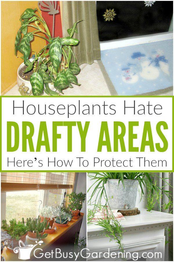 Pin on Houseplants Indoor