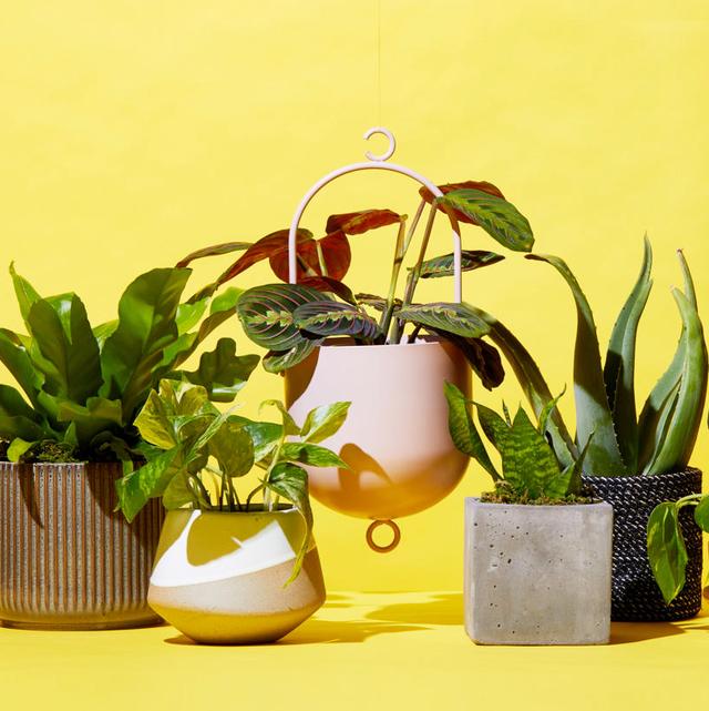 The Bouqs Company Plants Buy Plants Indoor Plants 400 x 300