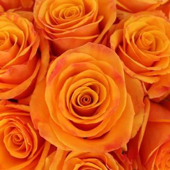 Tycoon Orange Rose - 300 Roses