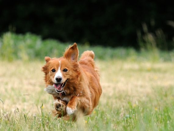 Healthiest Breed Of Dog Uk