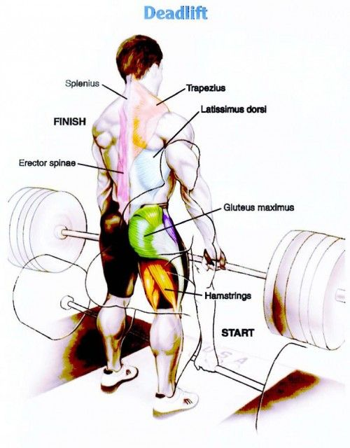 The dead lift works all of these muscles .... That and squats are ...