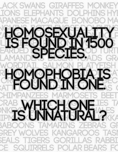 Homosexuality is found in 1500 species. Homophobia is found in one. Which one is unnatural?