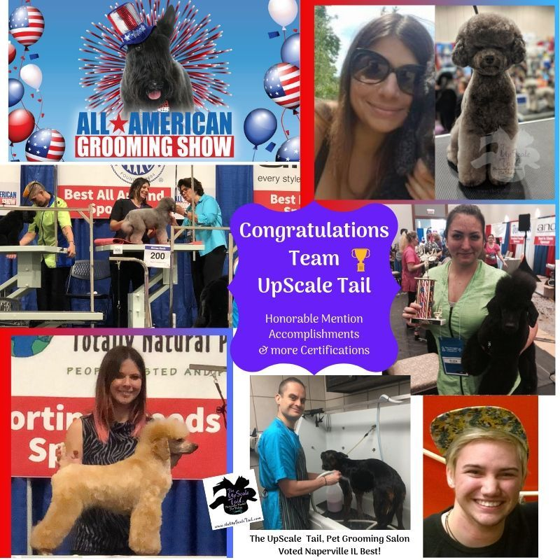 Pin By The Upscale Tail Pet Grooming On Award Winning Dog Grooming Competitions And Dog Groomers Naperville Pet Grooming Pet Grooming Salon Grooming Salon