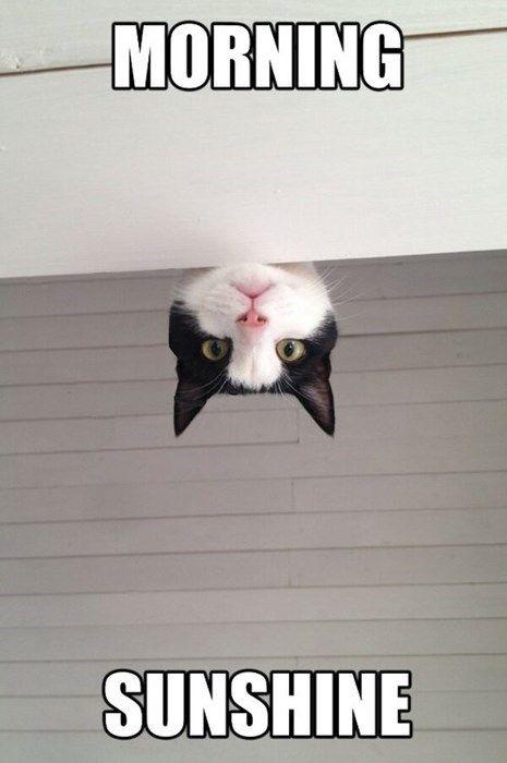 good morning cat meme funny