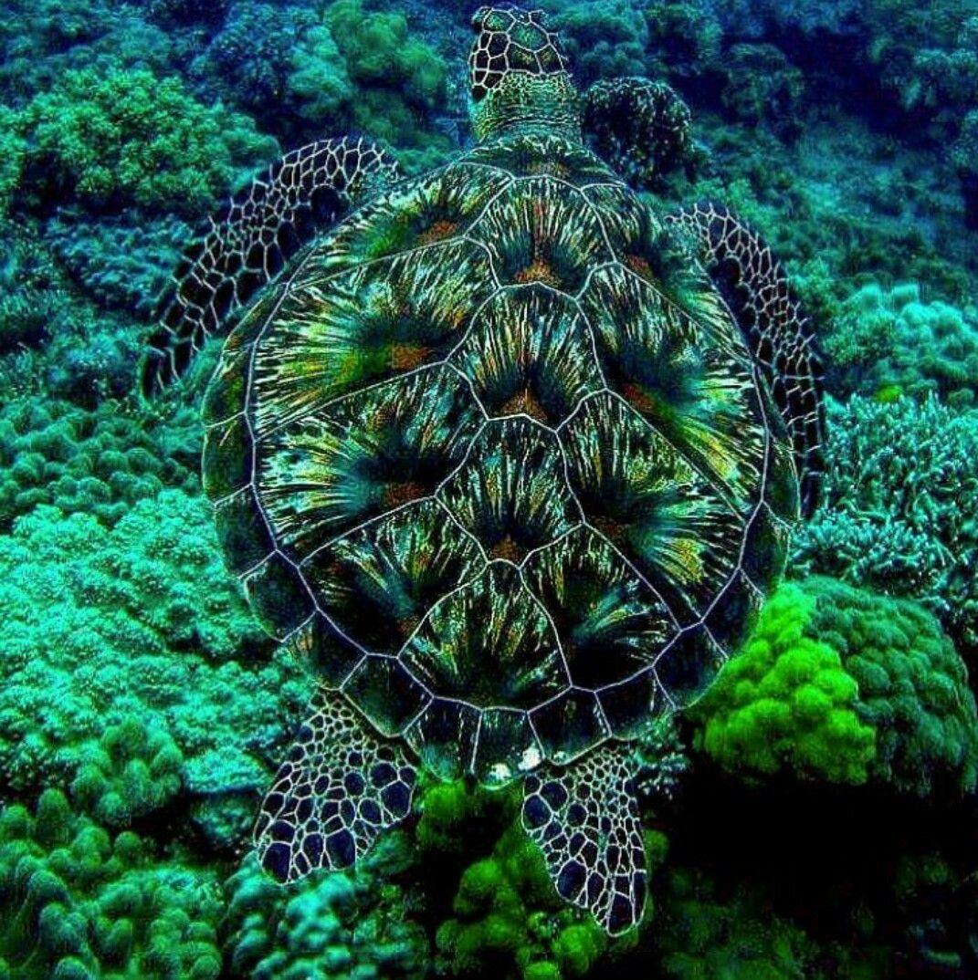 Sea Turtle | Meer und Meeresbewohner | Pinterest | Natur