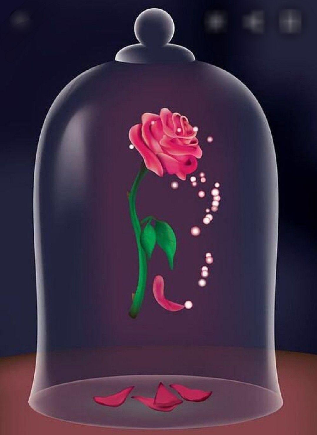 Rose De La Belle Et La Bete : belle, Belle, Bête, Bete,, Bête,