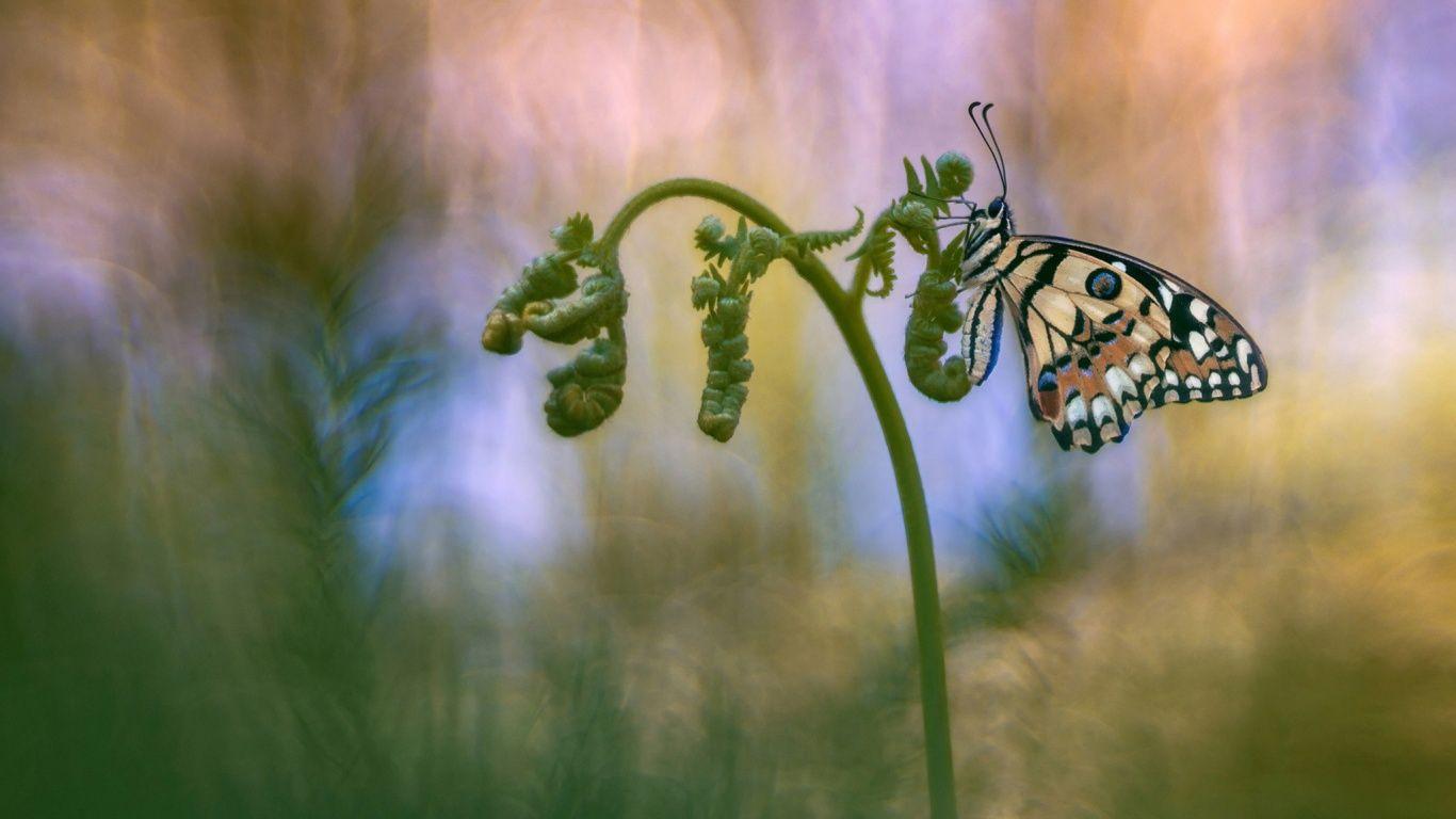 Скачать живые обои бабочки на компьютер