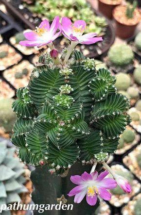 Lindas flores exóticas
