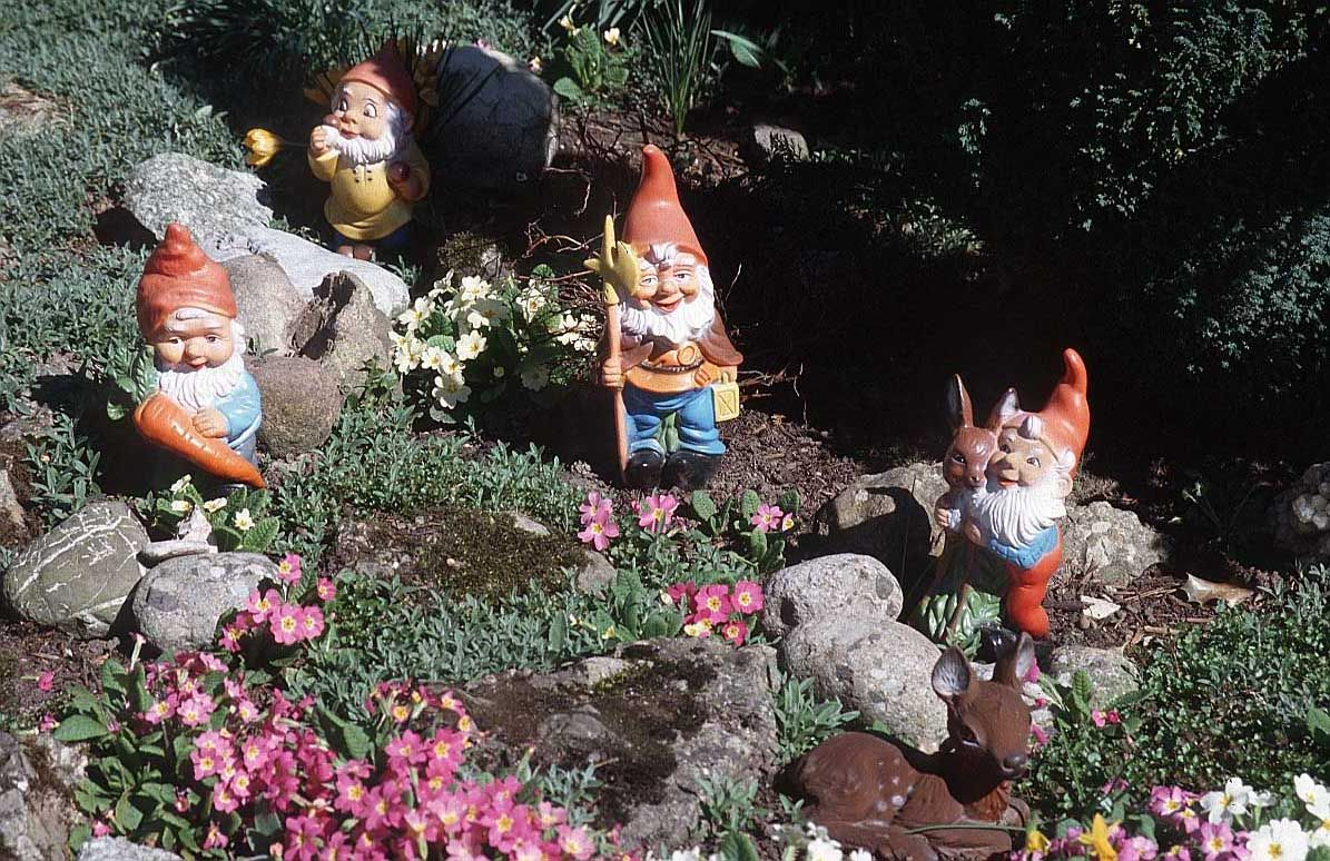 Gnome In Garden: Gnomes Hard At Work.