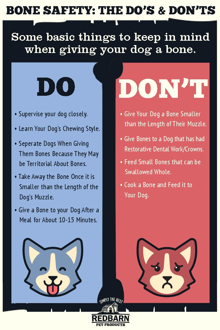 How To Safely Give Your Dog A Bone Dog Hacks Your Dog Teach