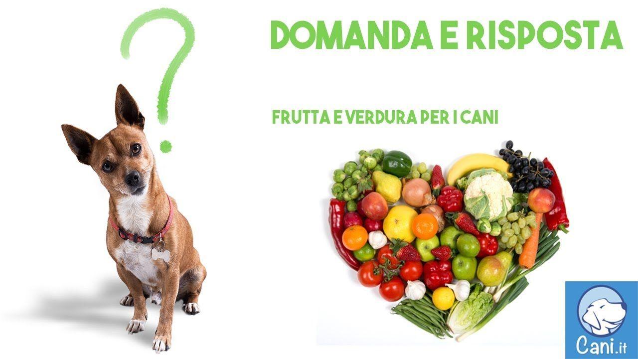 Domande Al Veterinario Cane quale frutta e quale verdura può mangiare il cane, e quale