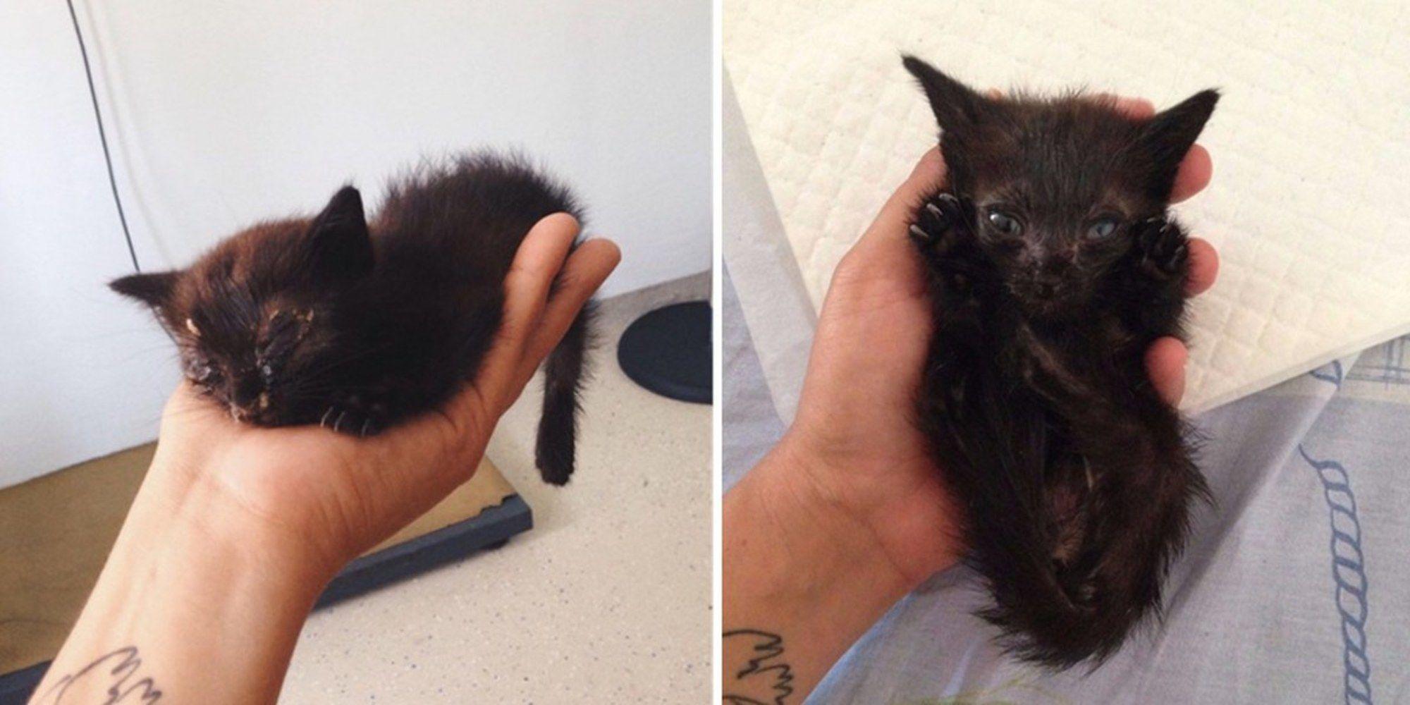Woman And Her Dog Rescue Kitten Abandoned In Bushes What A Difference 2 Days Can Make Kitten Rescue Kittens Kitten Pictures