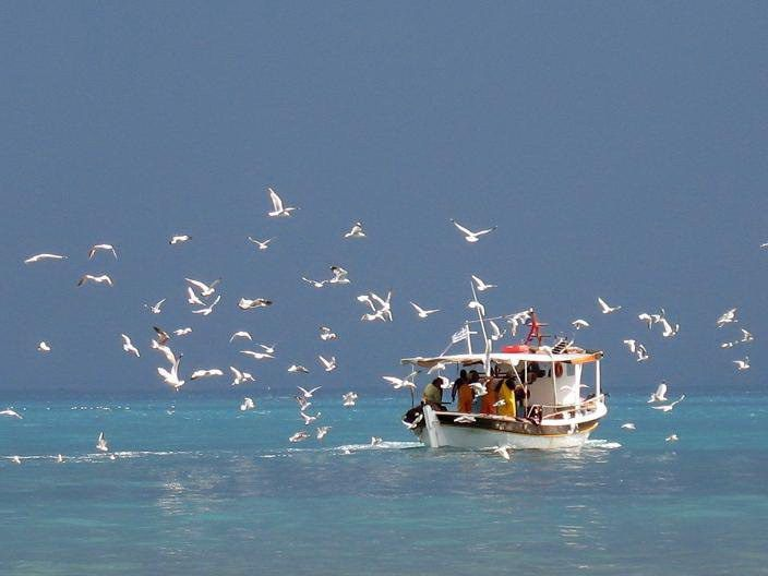 Bilderesultat for pictures of sea boats and seagulls