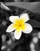 photography black and white with yellow - Google Search