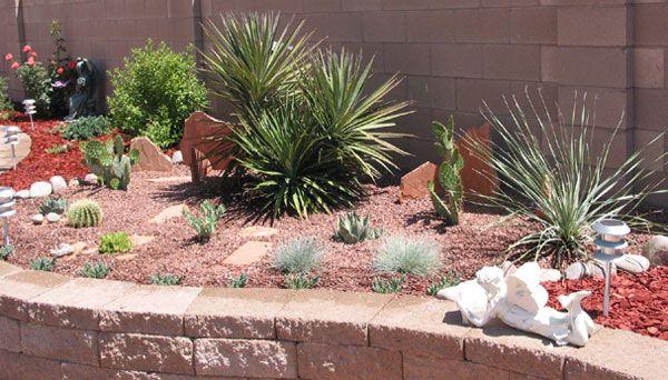 Desert landscaping backyard on pinterest desert backyard for Best plants for desert landscape