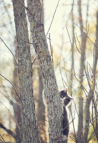 Cute kitty in the fall :}