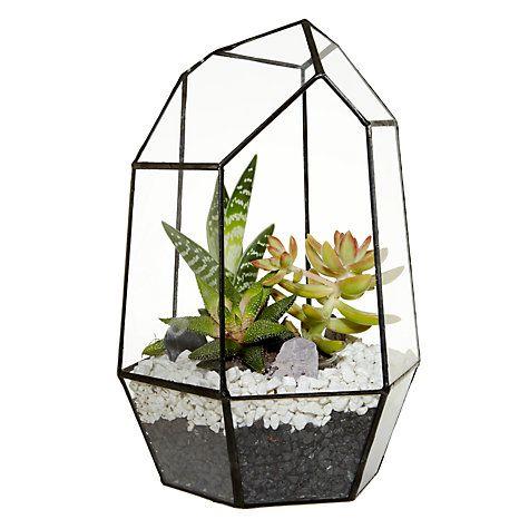 Buy Urban Botanist Gem Succulents Aztec Terrarium Online At Johnlewis.com