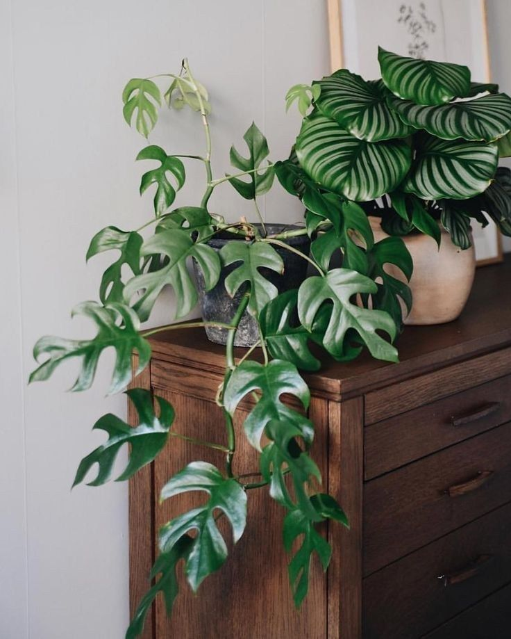 20 stunning indoor decorative plants to bring freshness 7 #plantsindoor