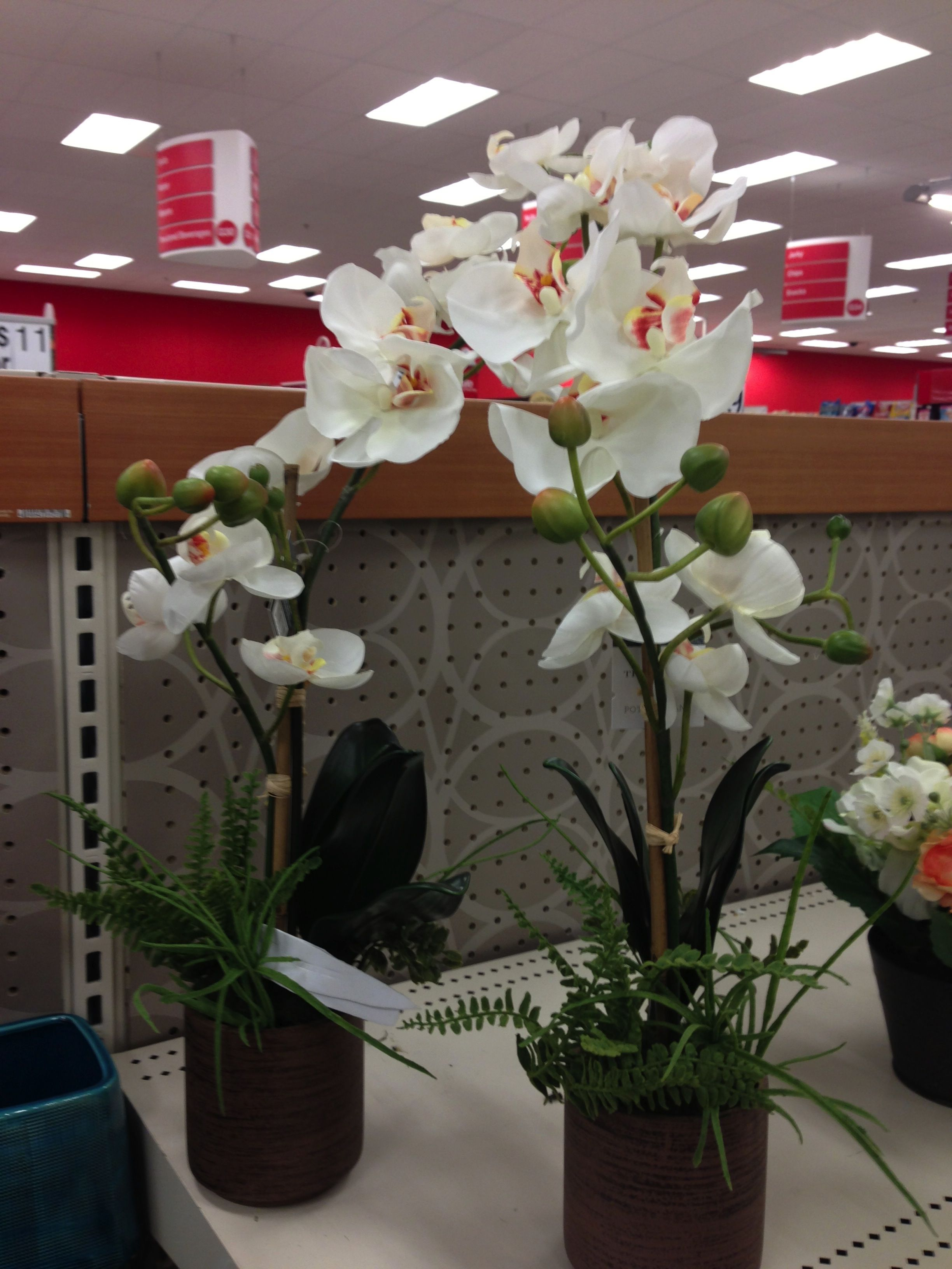 My Future Living Room Decor They Are Fake Orchids That I Found At Target D Flower Arrangements Orchids Living Room Decor