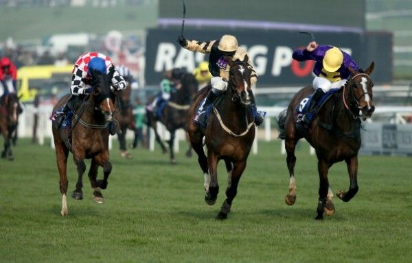 Cheltenham Races Tipster 2016