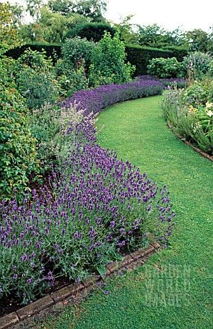 Lavender Border I Soo Want To Do This But I Have North Facing Home