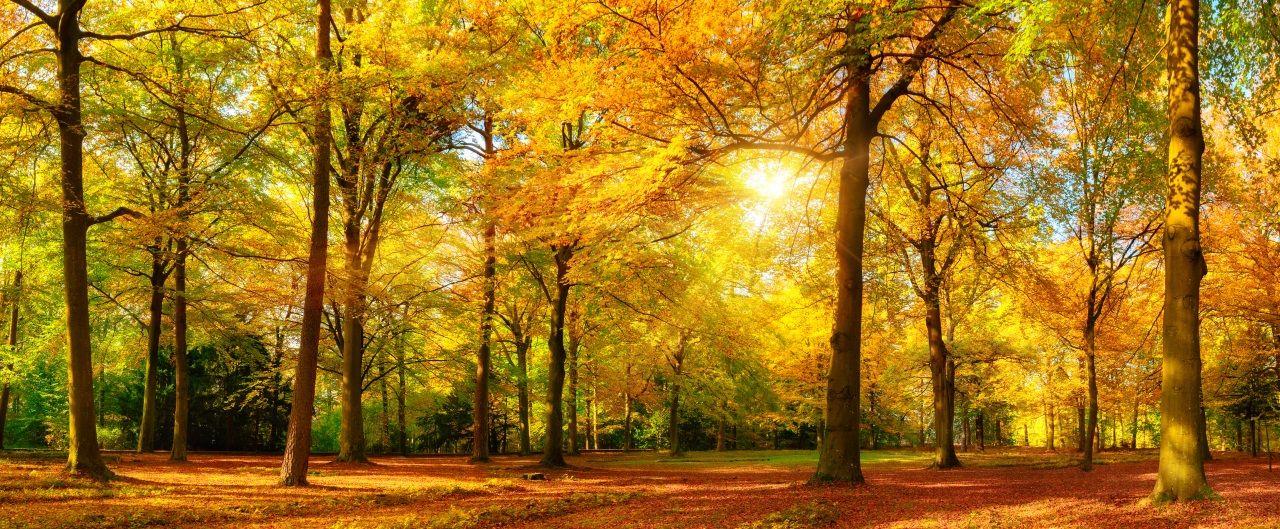 Automne Parc Arbres Rayons De Lumiere Feuillage Nature Tableau En Verre Arbres D Automne Deco Panel