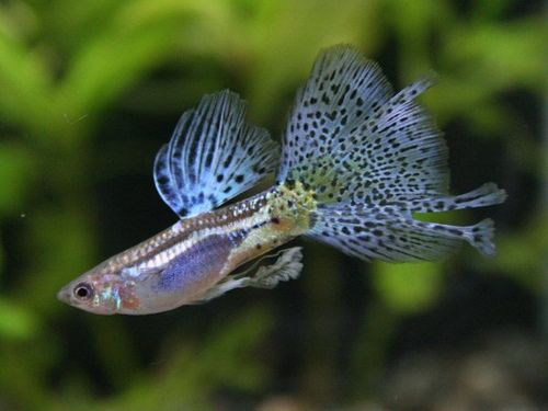 Below Is A List Of The Best Freshwater Fish For Beginners Browse