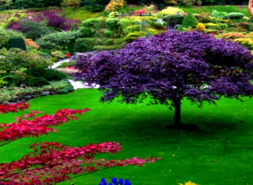 Beautiful garden pics gardens 6gvz4ur