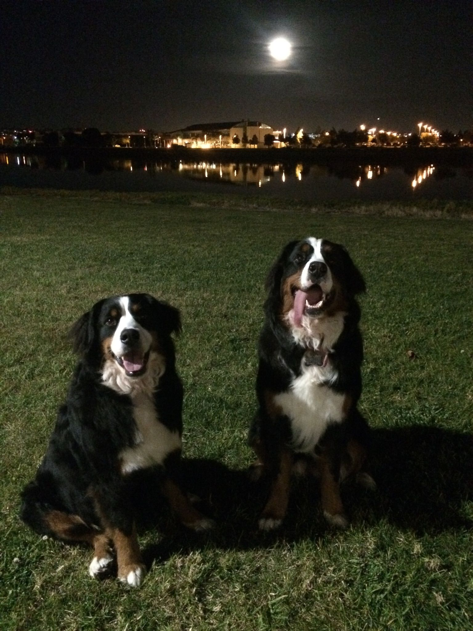 Two Girls In San Diego Bernese Mountain Dogs Plural Bernese