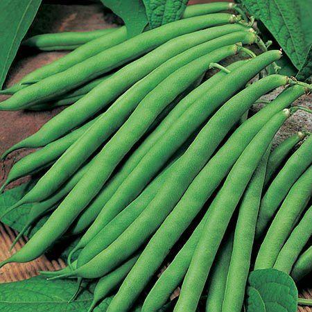 Dwarf French Bean Tendergreen 150 seeds Vegetable