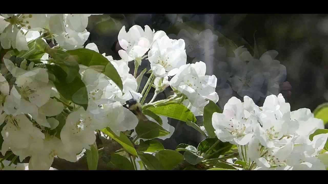 Beauty of Nature - Spring Time