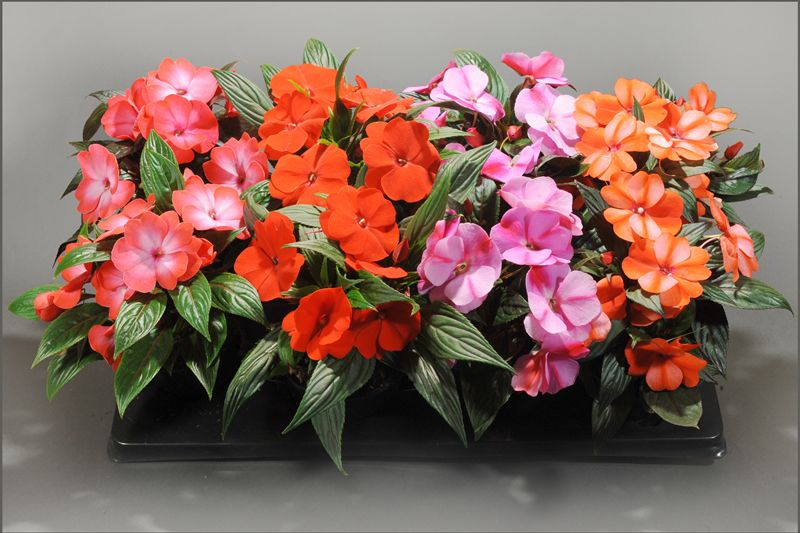 Niecierpki Balkon Szukaj W Google Floral Wreath Floral Succulents