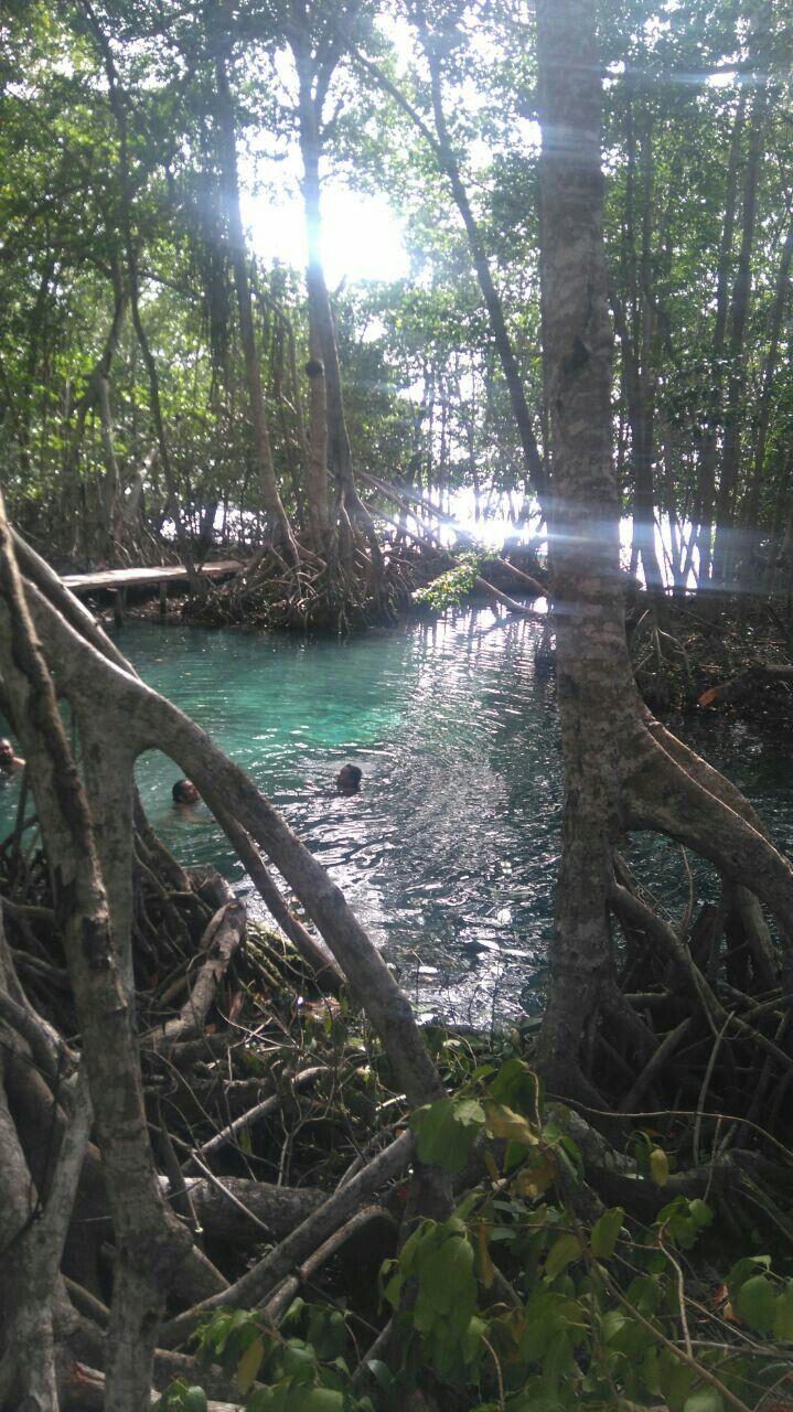 Ojo de agua en los manglares Celestún Mérida