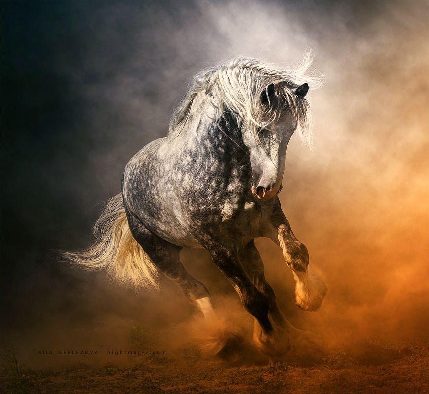 Умные фразы на картинках с лошадьми